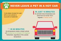 Summertime! / Fun things to do with your dog during the summer, as well as things to think about to keep them safe! #dogs #summer #dogsandsummer #summersafety