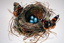 Butterflies / by Diane Appanaitis
