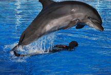 Delphintherapie Delphin