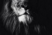 Animals<3