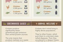 Entomophagy Infographics