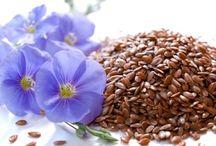 plantes graines