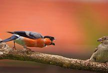 Vögel / Vögel in unseren Gärten