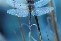 libelula y mariposas