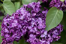 Stunning Flower Bushes / http://dabbiesgardenideas.com