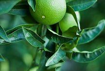 Lime&Citron