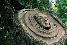 ☼ ČARO ☁ prírody ☁ STROMY ☼ / by Aňa