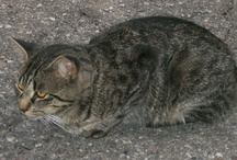Cats On Our Adoption List / They all have a story. They're just hoping for a better one. oasisanimalrescue.ca