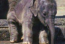 zoo slonů