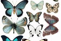 butterfly crown