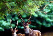 Delightful Creatures