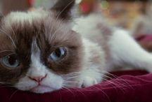 Grumpy cat ( for love of grumpy ) / by raven moon
