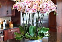 Orchids in planters / by Cheryl Jones