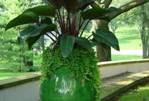container garden / by kimhudson703@gmail.com kimhudson703@gmail.com