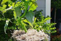 Plants :-)