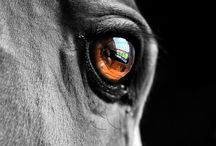 The eyes of horses