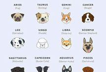 doggie woggies