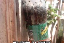 flies trap
