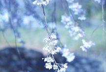 flower I like