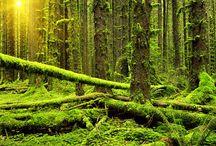 Forest/Trees / Alexander Vershinin photography