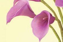 Harisnya virág videók