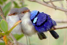 Prachtige vogels en andere dieren