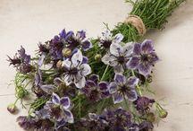 Home - flower & herb seeds