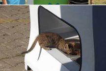 Helping homeless animals