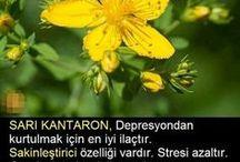 Bitkilerle Tedavi