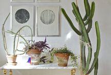 Urban Jungle / plants, interior design