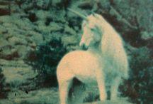 Horses.Unicorns.