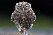 owl is my soul