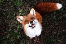 Foxy♡