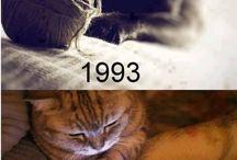 Cats ;)