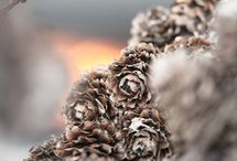 Articles About Pine Cones
