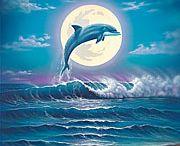 Libdolphins