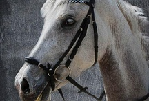 Equestrian and Riding things / Anything of equestrian and riding photographie