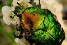 Through Green Tinted Glasses / I love the many hues of Green / by Dee Sheff