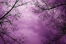 Purple / Purple Things I Like