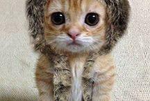 so cute!!!!!!