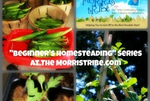 """Beginner's Homesteading"" Series / Want to get started homesteading but don't know where to begin?  Here's what you're looking for! / by Kelly Morris"