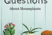 Gardening Know How Top 10 Plant Q&A