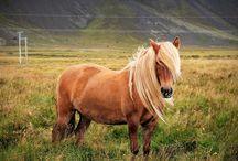 Beautiful Animals etc.