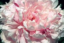 I love flowers / by Tracy Wachholtz-Ordway