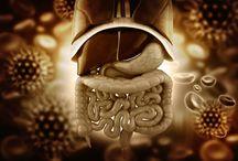 CHROMOENDOSCOPY  COLON / Chromoendoscopy of the colon  IBD