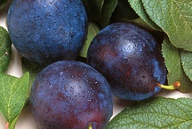 Healthy Fruit Recipes - Pick of the bunch for healthiest fruit / Which fruit are the healthiest