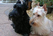 Scottie Dogs I / by Karen Grant