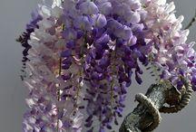 Flores / by Girasol Primavera