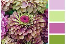 Colors, colores, couleurs