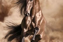 Horses / The beautiful breed of the horse does need some attention in my pinning. This is where you will find the most beautiful, graceful, elegant beings of these creatures.